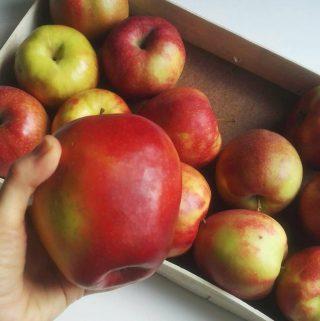 Odrody jabĺk – ako ich používať v kuchyni?